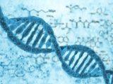 Выявлены генетические особенности, влияющие на рост человека