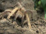 Ученым удалось выявить насекомое, обладающее наиболее болезненным укусом